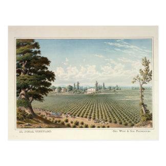 Cartão Postal Vinhedo do EL Pinal, San Joaquin County