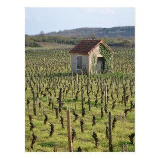 Cartão Postal Vinhedo em Borgonha France