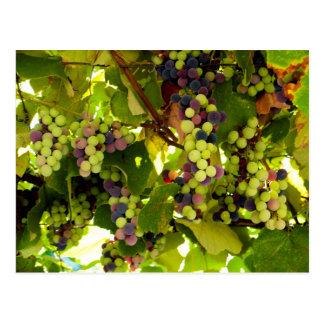 Cartão Postal Vinho crescente