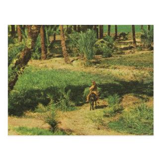 Cartão Postal Vintage agricultura do delta de Egipto da réplica,