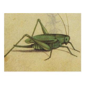 Cartão Postal Vintage do grilo do inseto