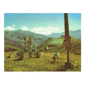 Cartão Postal Vintage Haute Semien da réplica, Etiópia, 3750m