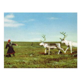 Cartão Postal Vintage Noruega, Lapland, Sami com rena