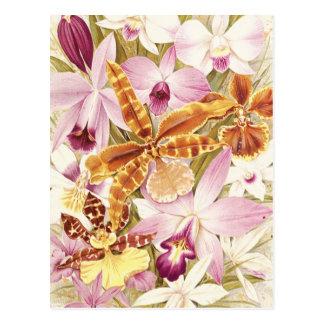 Cartão Postal Vintage roxo cor-de-rosa das flores da flor da