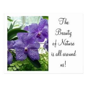 Cartão Postal Violeta do pomar