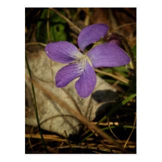 Cartão Postal Violeta selvagem pelo Mac de Shawna