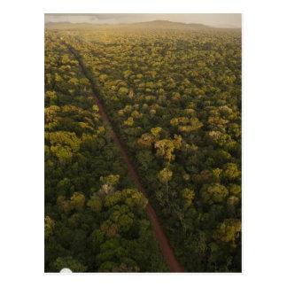 Cartão Postal Vista aérea da floresta húmida. Reserva de