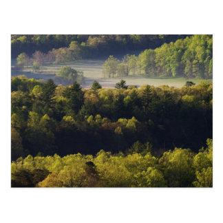 Cartão Postal Vista aérea da floresta na angra de Cades, grande
