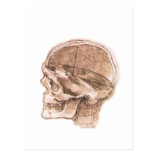 Cartão Postal Vista de um crânio Leonardo da Vinci