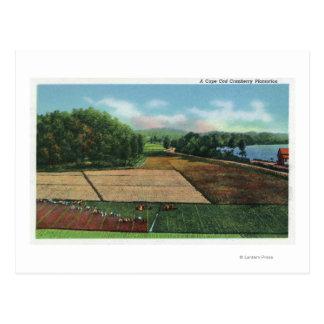 Cartão Postal Vista de uma plantação do arando