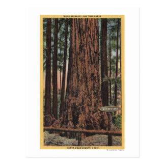 """Cartão Postal Vista do """"do disjuntor pescoço"""" no parque grande"""