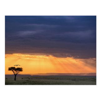 Cartão Postal Vista panorâmica da árvore do abutre e da acácia