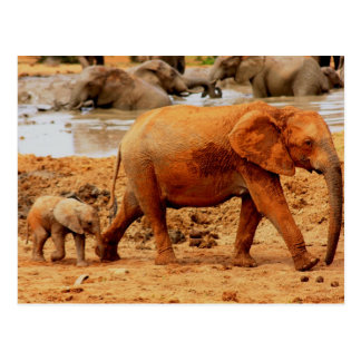 Cartão Postal vitela e elefante recém-nascidos
