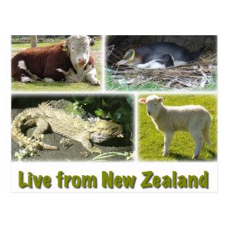 Cartão Postal Viva de Nova Zelândia