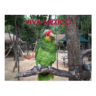 Cartão Postal Viva México