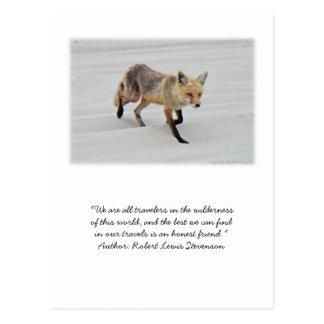 Cartão Postal Vixen do Fox vermelho - parque estadual da praia