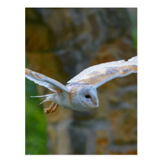 Cartão Postal Vôo da coruja de celeiro