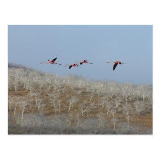 Cartão Postal Vôo dos flamingos