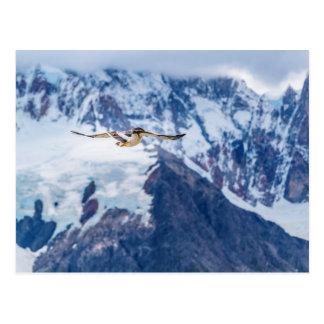 Cartão Postal Vôo Patagonian Austral do pássaro