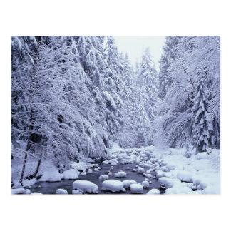 Cartão Postal WA, floresta nacional do Padeiro-Snoqualmie da