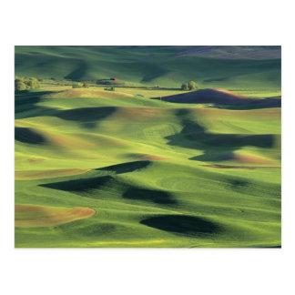 Cartão Postal WA, Whitman County, terra de Palouse, vista
