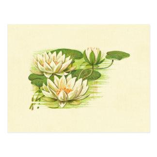 Cartão Postal Waterlilies branco