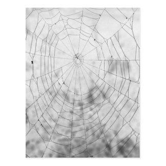 Cartão Postal Web de aranha