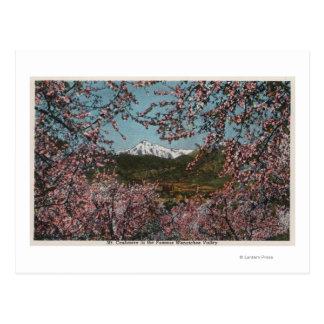Cartão Postal Wenatchee, WAView da caxemira do Mt. com árvores