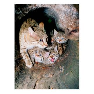 Cartão Postal Wildcat asiático