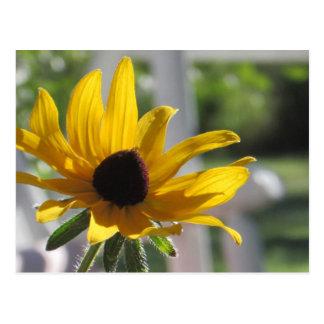 Cartão Postal Wildflower amarelo de Susan de olhos pretos