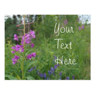 Cartão Postal Wildflower do Fireweed de Alaska