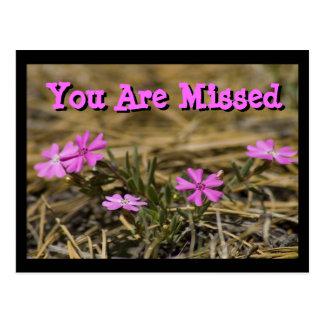 Cartão Postal Wildflower Showy ocidental do Phlox