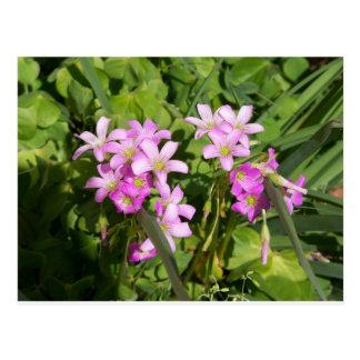 Cartão Postal Wildflowers cor-de-rosa delicados do primavera