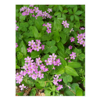 Cartão Postal Wildflowers delicados cor-de-rosa pequenos