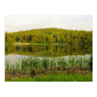Cartão Postal Wildflowers, lago Marshall dos Bullrushes
