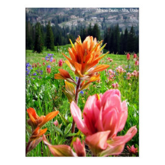Cartão Postal Wildflowers maravilhosos (6)