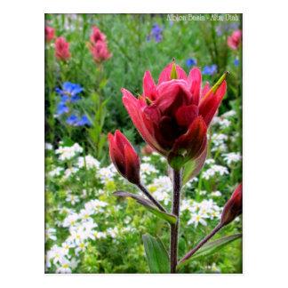Cartão Postal Wildflowers maravilhosos - bacia de Albion, Utá