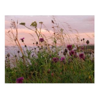 Cartão Postal Wildflowers no crepúsculo