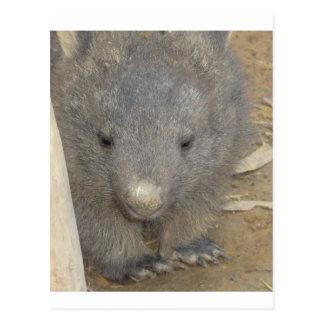 Cartão Postal Wombat