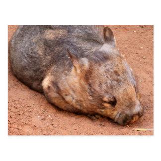 Cartão Postal Wombat Peludo-Cheirado do sul