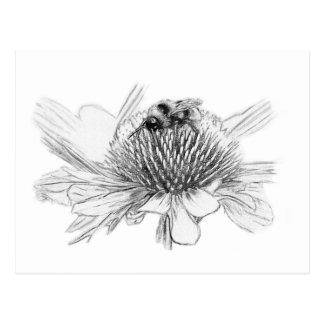 Cartão Postal Zangão e flor
