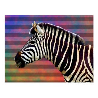 Cartão Postal Zebra em listras psicadélicos