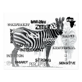 Cartão Postal Zebras originais