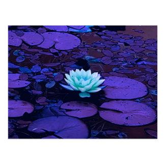 Cartão Postal Zen floral da lagoa de turquesa azul roxa da flor
