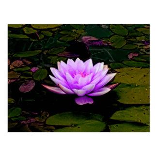 Cartão Postal Zen floral da lagoa do verde do rosa da flor de