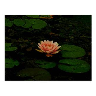 Cartão Postal Zen floral verde escuro alaranjado da lagoa da
