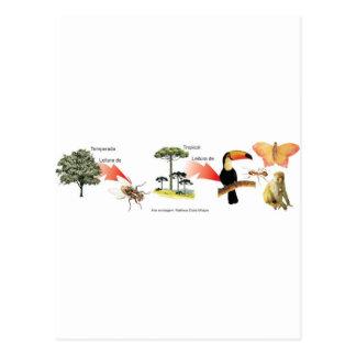 Cartão Postal zona da mata tropical esquema didático
