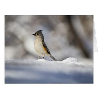 Cartão Pouco pássaro da neve