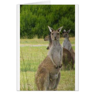 Cartão Prado do canguru