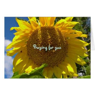 Cartão Praying do girassol
